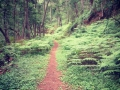 Hogsback   The Enchanted Forest.