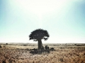 Kakamas   Find a solitary quiver tree.