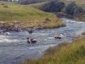 Underberg   Go tubing down the river.