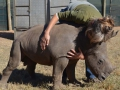 Living with Orphaned Rhinos Programme