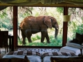 Elephant safari.
