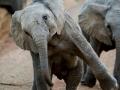 One happy elephant.