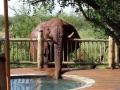 One thirsty elephant.