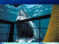 Great white shark cage diving in Gaansbaai.