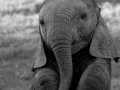 Just the cutest baby elephant.