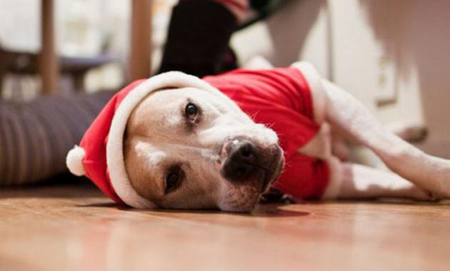 Image of sad dog over Christmas