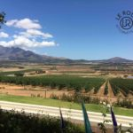 Cape-town-wine-farms